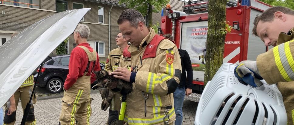 Brandweer bevrijdt miauwende verstekeling