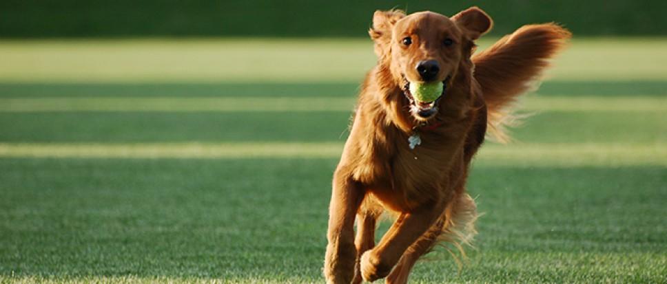 Hondenbelasting afgeschaft in 2019