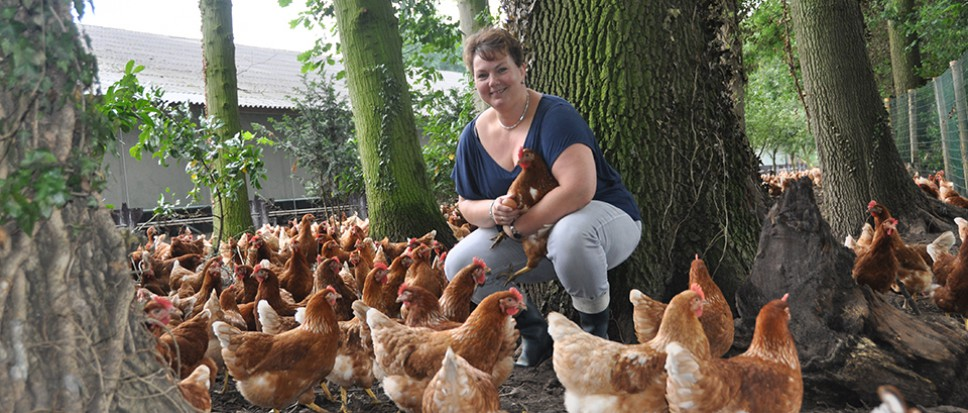12.000 kippen op ontdekkingstocht