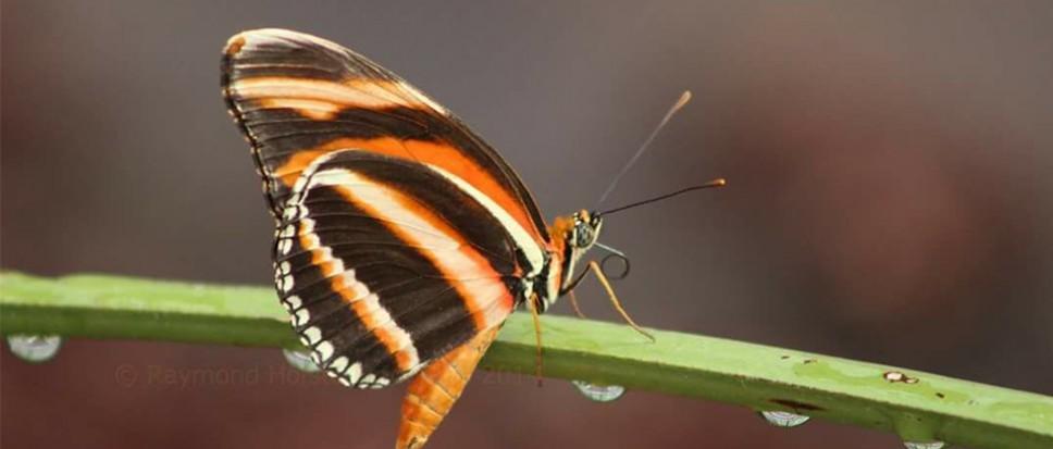Vlinders en bessen in de Bornsche Maten
