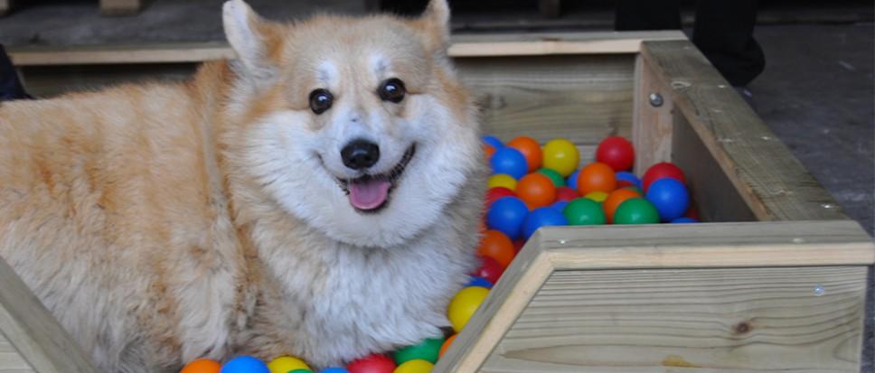 Minikermis voor de honden