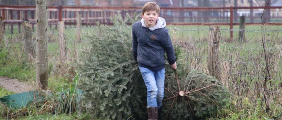 Kerstbomen uit alle hoeken en gaten