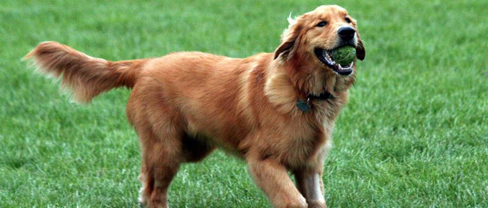Losloopgebieden honden aangewezen