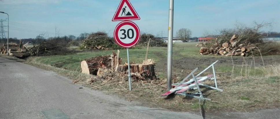 Vragen van de SP over bomenkap