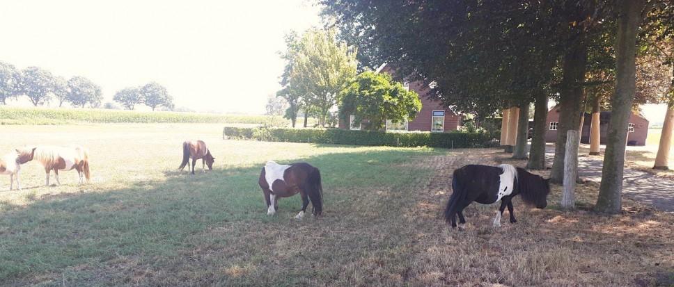Wie mist er pony's?