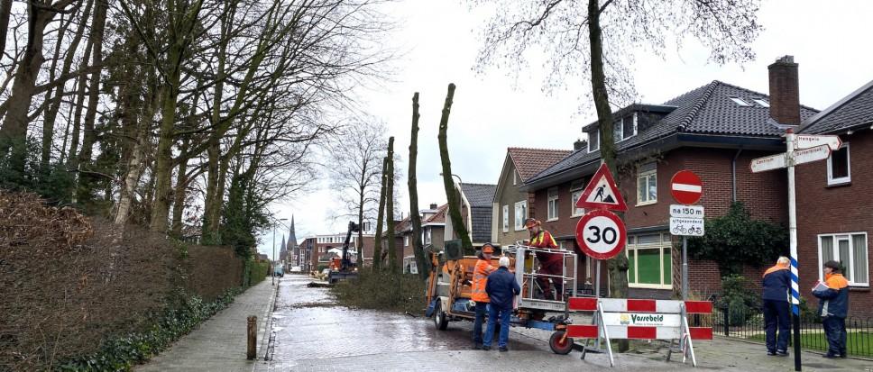Bomen Bornerbroeksestraat geveld