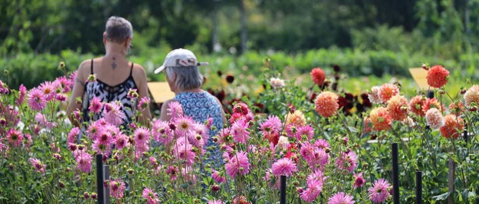 Aangepaste open dagen Floralia