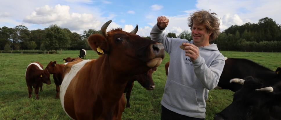 Dorset zet Koeien van Jelle 'op de kaart'