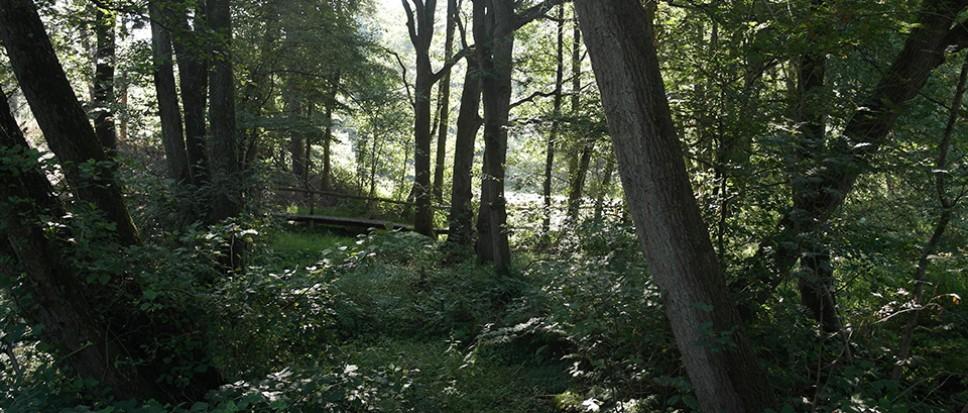 16.500 bomen/struiken erbij in Borne